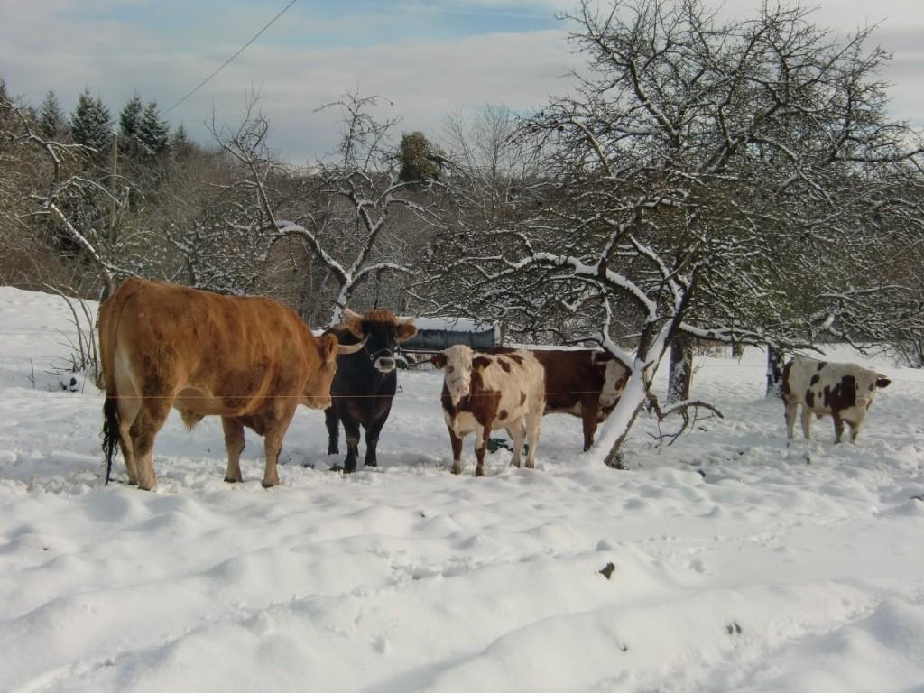 ...unsere kleine Herde...