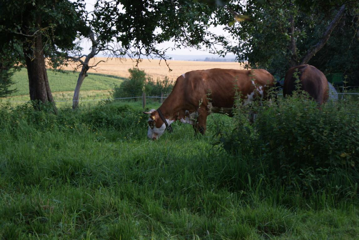 ...und das Gras auch, wir sind umgezogen auf die Ost Weide...
