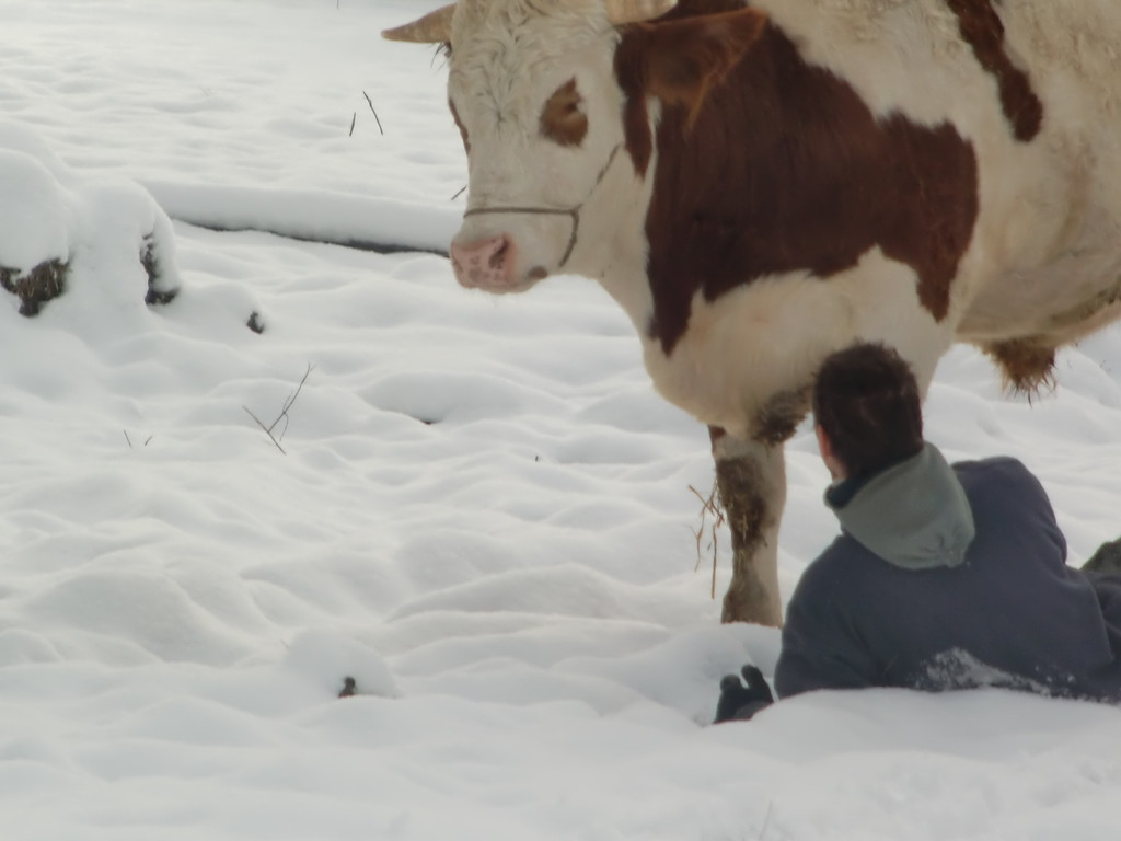 ... Syam in den Schnee zu schupsen.