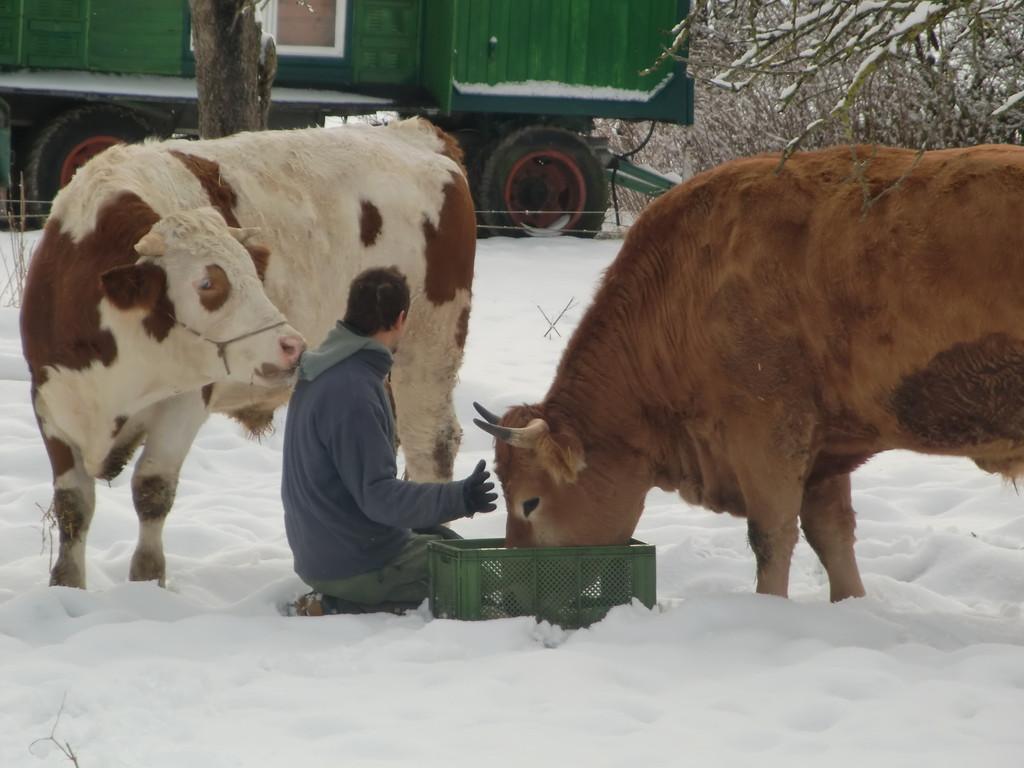 Sie lieben Schnee ...