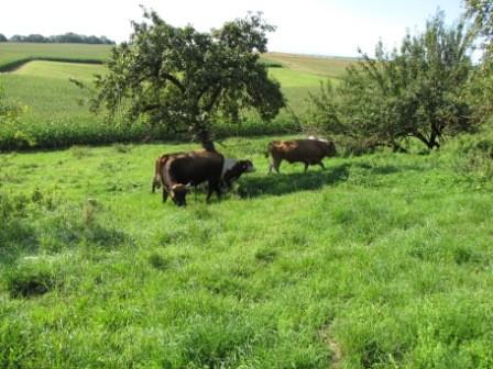 Hier sind wir alle gluecklich und zufrieden auf der Weide.