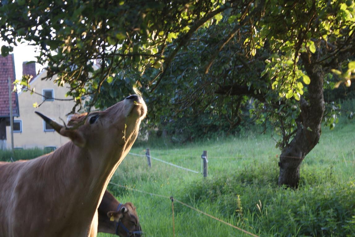 ...und obwohl die Aepfel noch gruen sind schmecken sie uns...