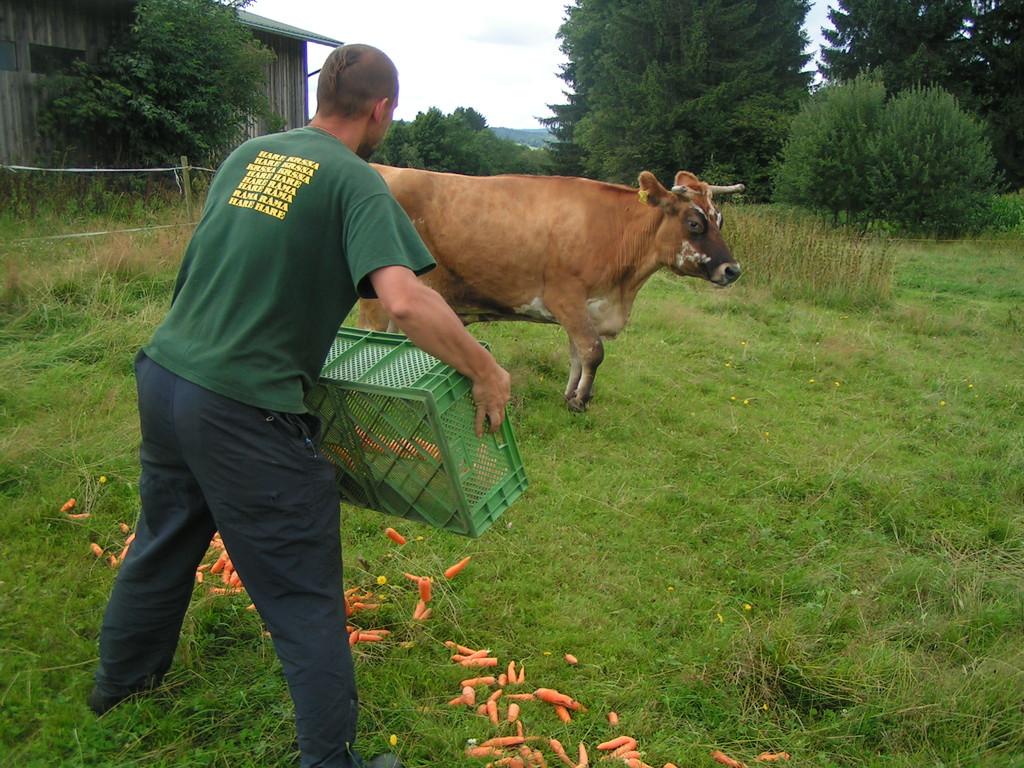Dann brachte der Syam noch ein paar Karotten...