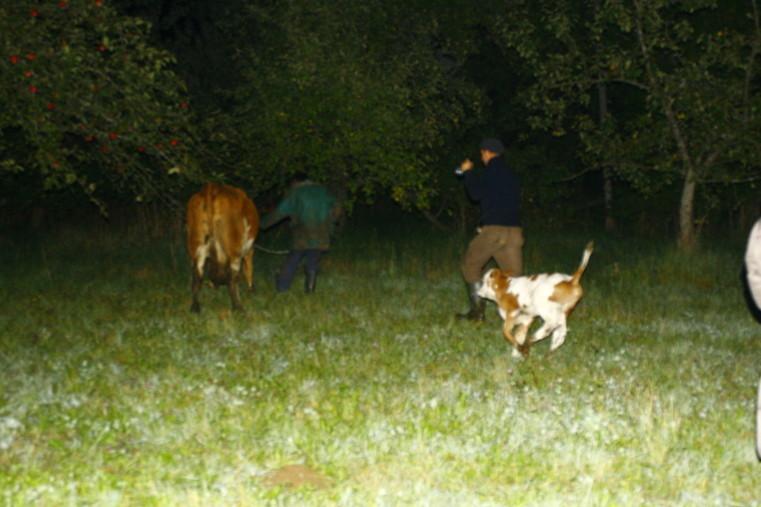 """...schon 8 Tage spaeter mit meiner Mama zu """"Happy Cow"""" umgezogen."""