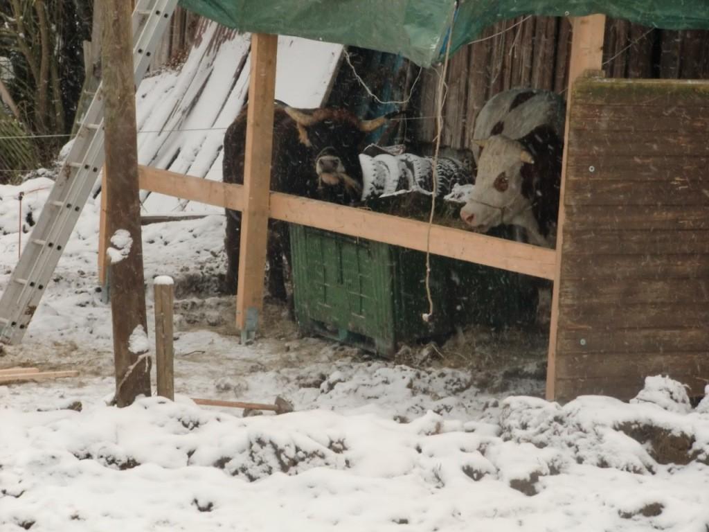 Rechtzeitig zum ersten Schnee stand der neue Futterplatz,...