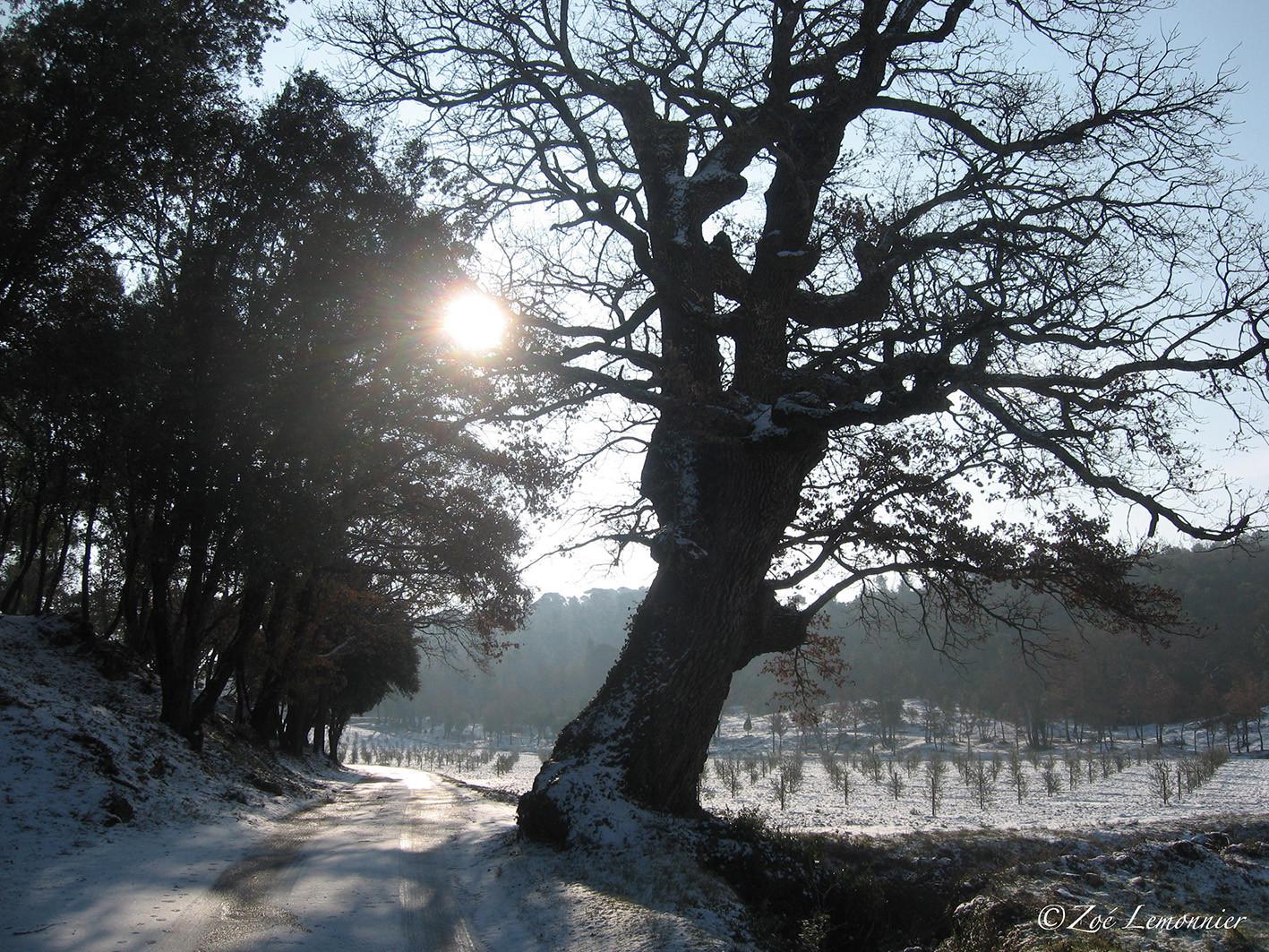 lendemain de neige dans le Var