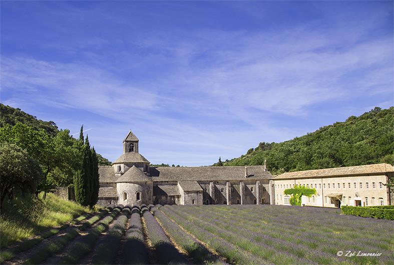 Abbaye de Senanque in Gordes