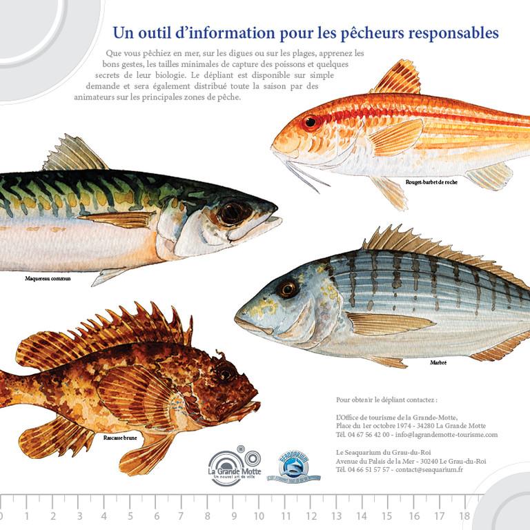 Sensibilisation aux tailles légales de capture des poissons de Méditerranée - OT de La Grande Motte et Seaquarium du Grau du Roi - 2012