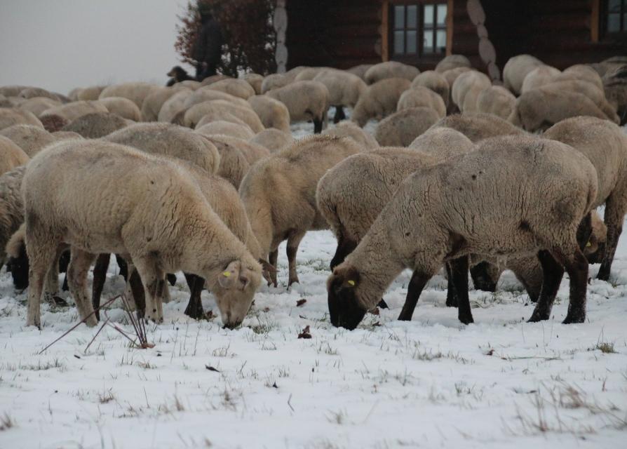Sind wir nur noch Schafe für die Tierpraxenbetreiber