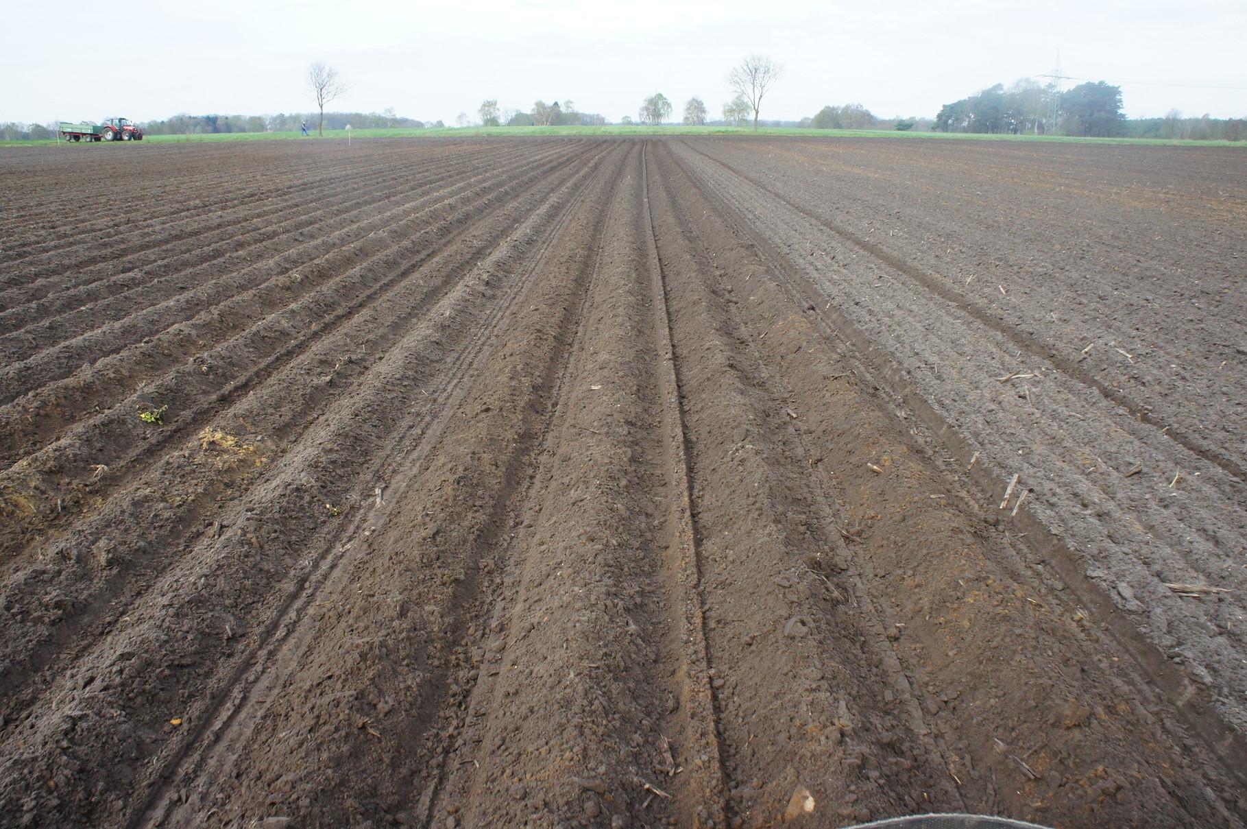 Kartoffelpflanzung-ein Feld nach dem Pflanzen von Kartoffeln