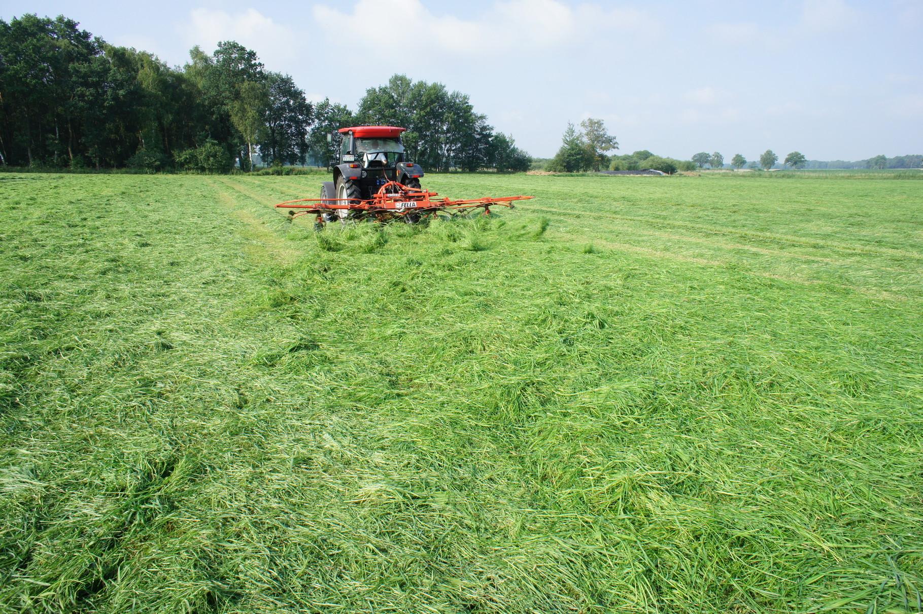 Ernte von Gras- nach dem wenden
