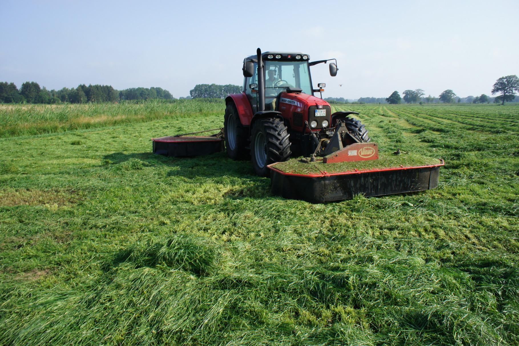 Ernte von Gras- zuerst mähen
