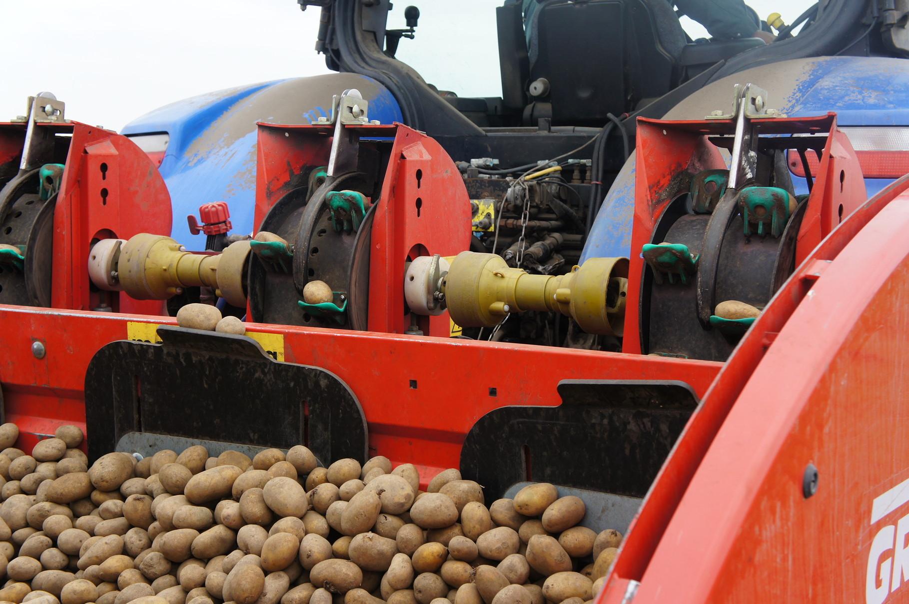 Kartoffelpflanzung-