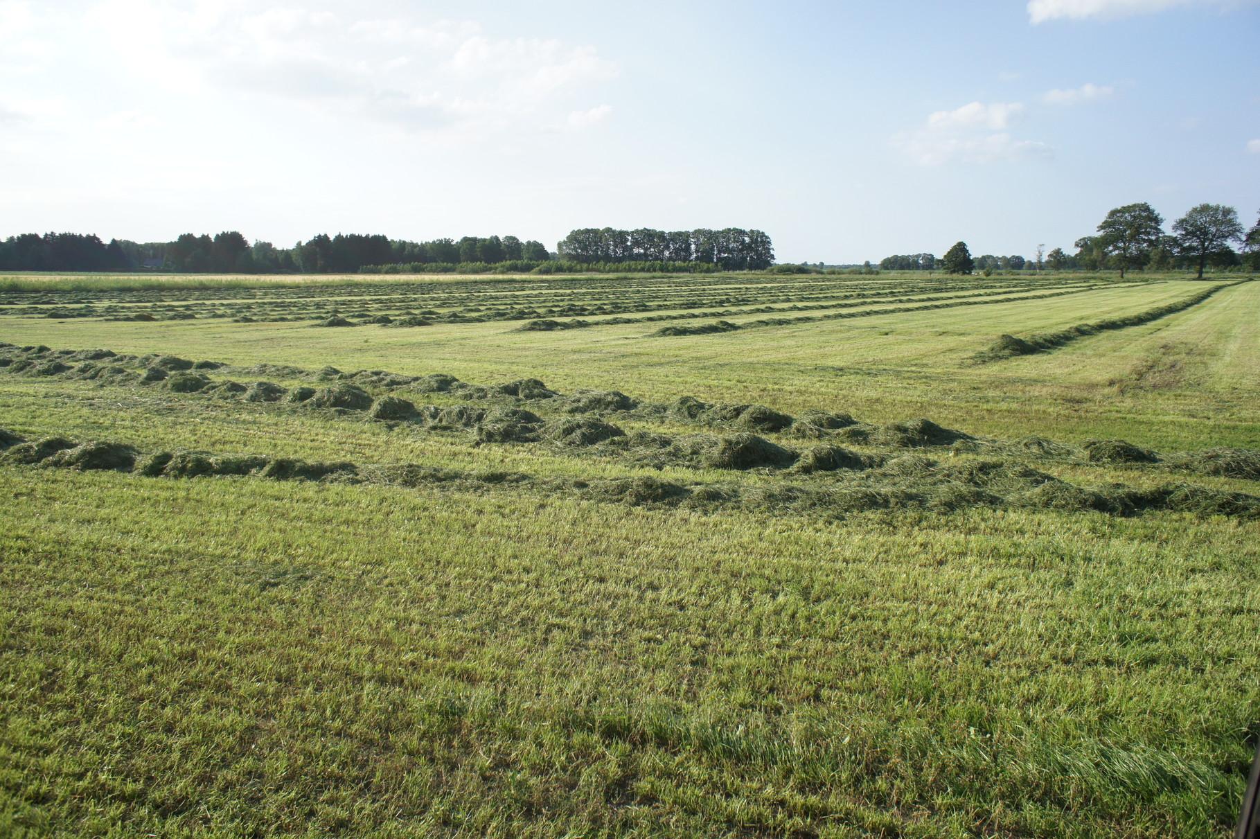 Ernte von Gras- nach dem zusammenschwaden