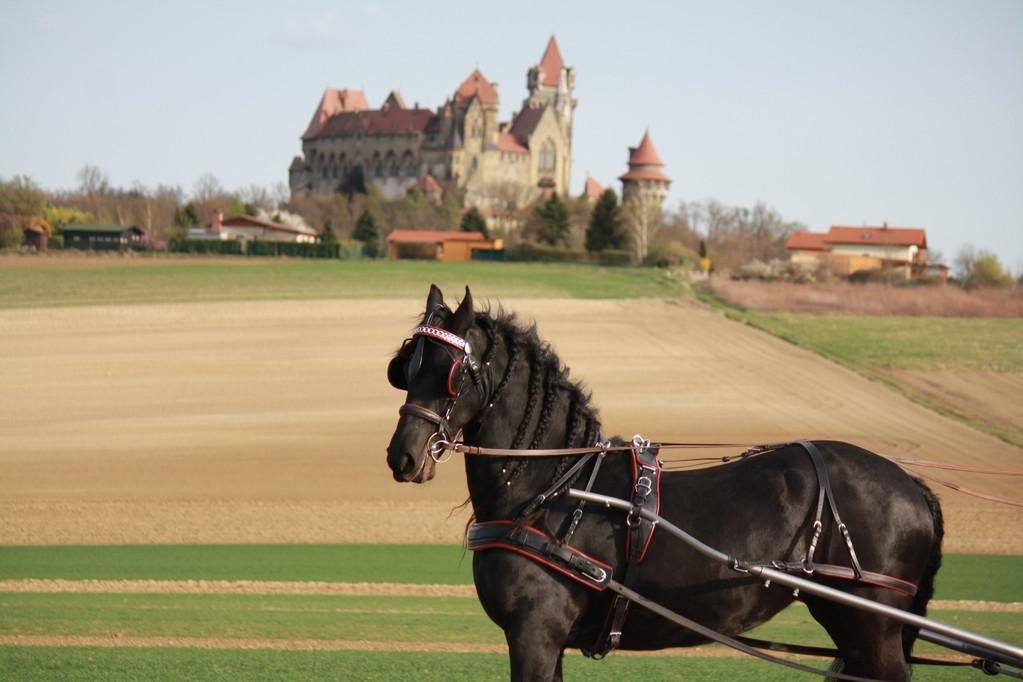 Princess vor herrlicher Kulisse - Burg Kreuzenstein