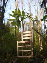 Grünholzstuhl aus Esche im Wald unter einem Eschenzweig