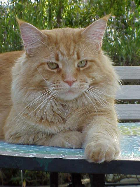 Ginger vom Riedpark