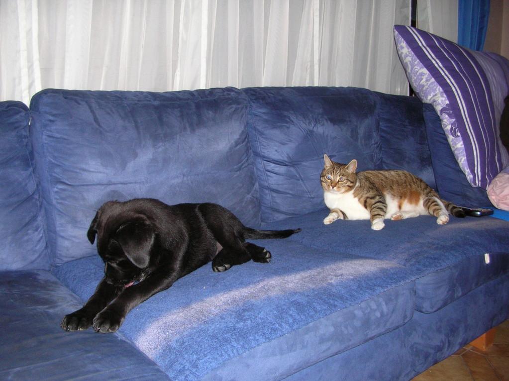 Ronja & Banjo das 1. Mal zusammen auf dem Sofa