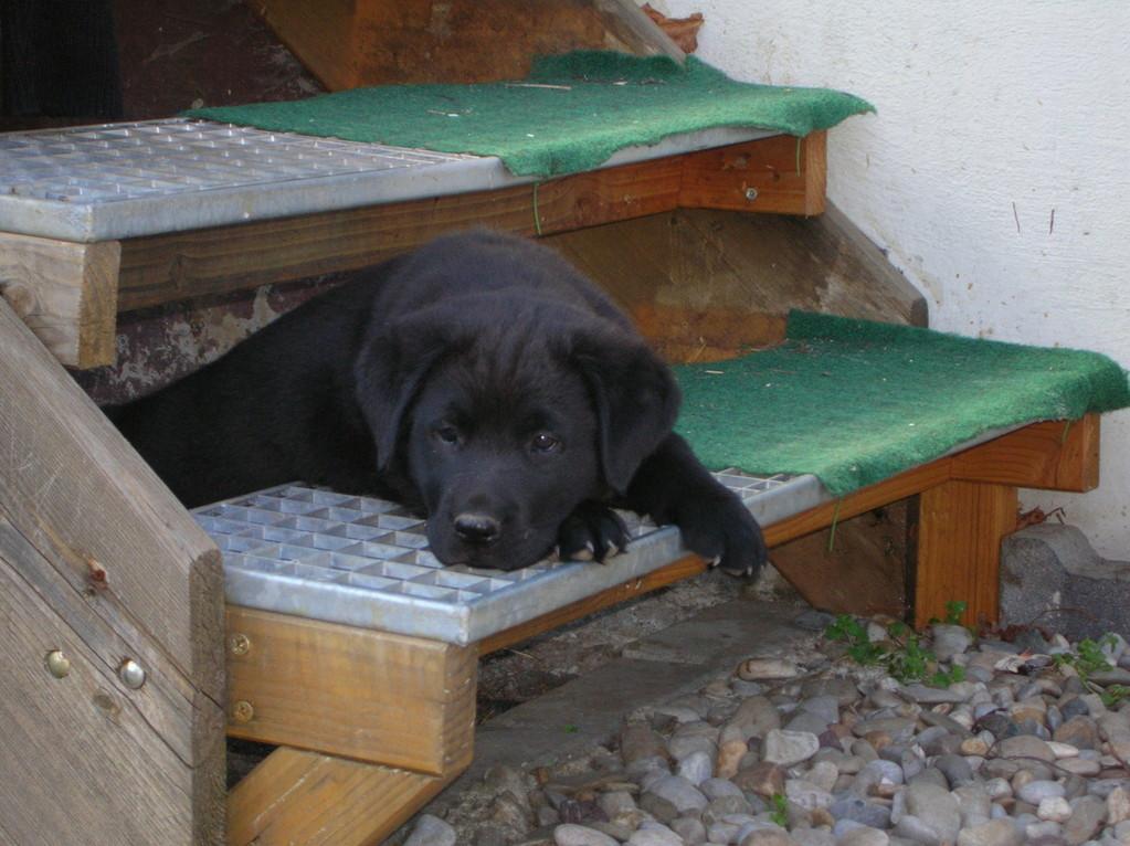 Balu versucht sich durch die Treppenstufen zu arbeiten