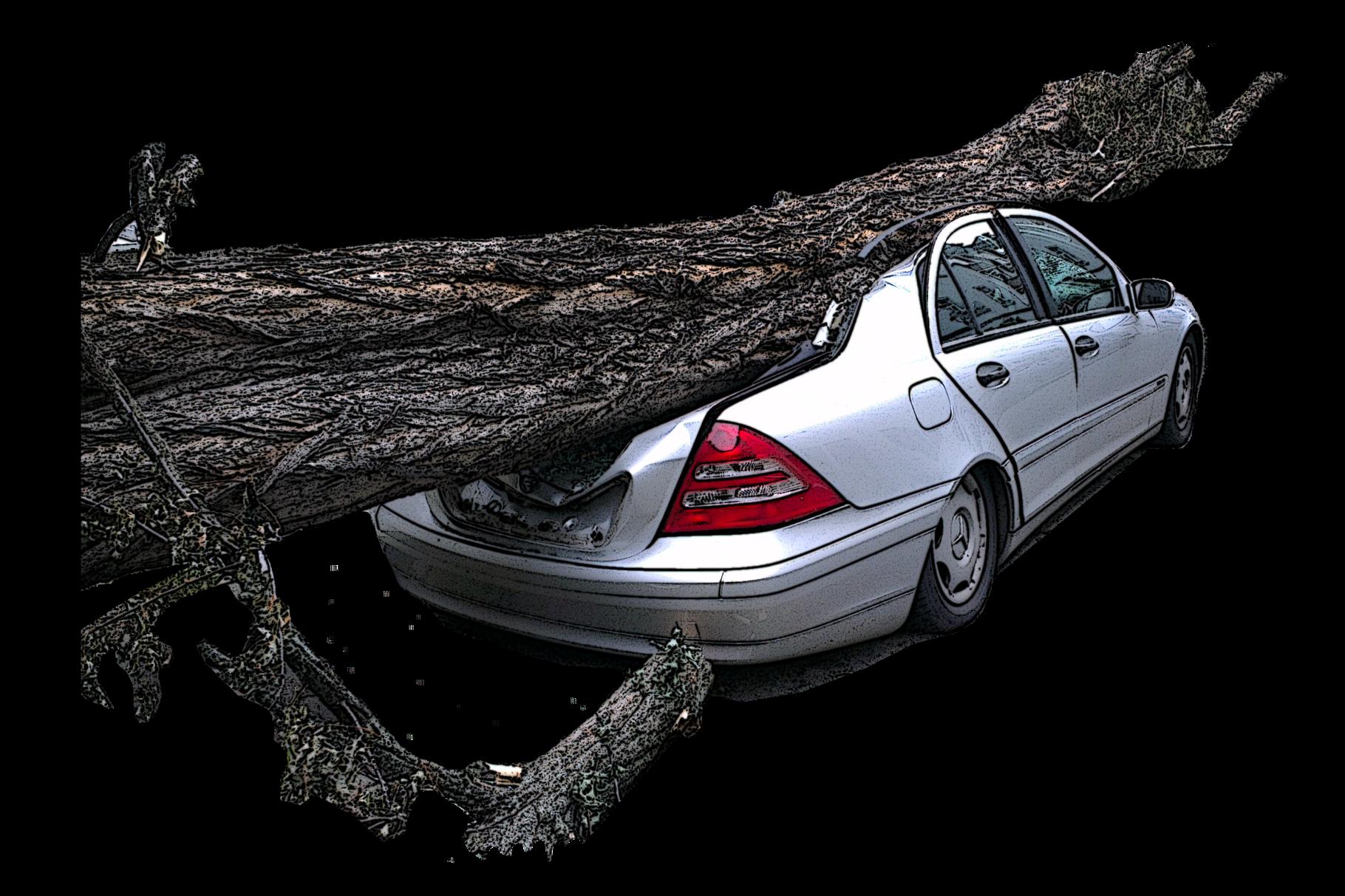 Unfall Kasko, Sturmschaden, Baum, Auto, PKW
