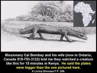 Riesenechse in Kenia