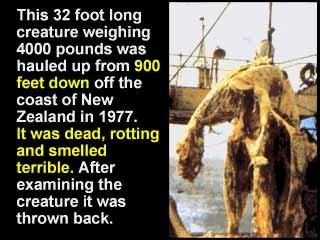 Kadaver vor Küste von Neusseland 1977 9,7m 1,8t