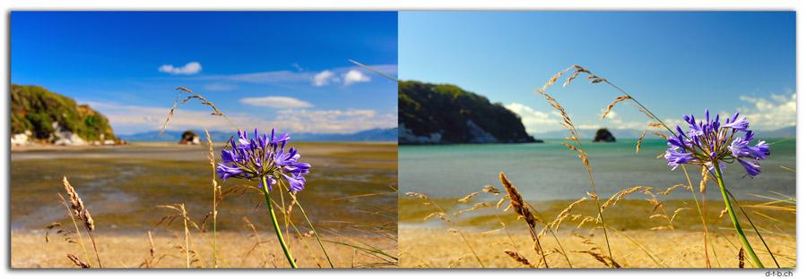NZ0617.Puponga Point