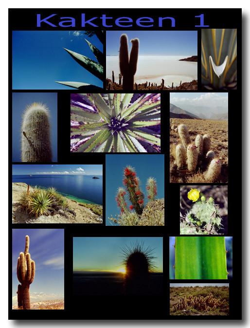 Kakteen 1 / Cacti 1