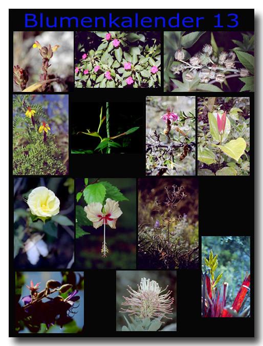 Blumen 13 / Flowers 13