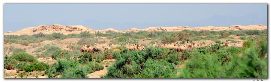 CN0086.Grosse Mauer und Kamele