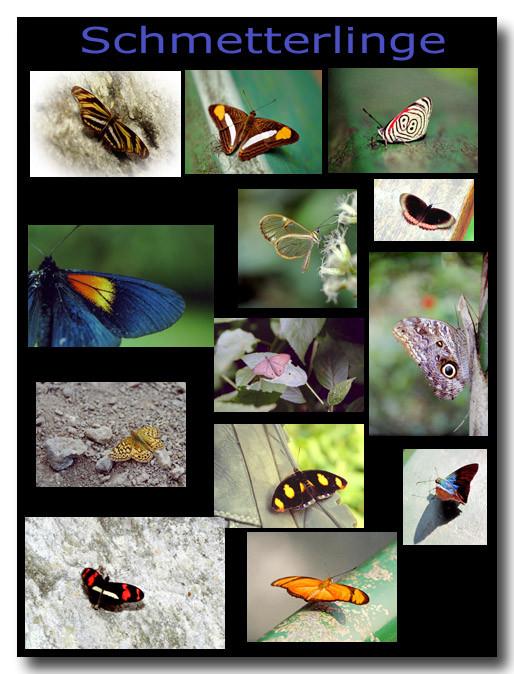 Schmetterlinge / Butterflies