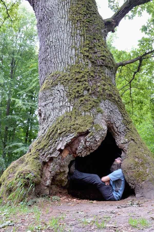 Polen, Bialowieza Nationalpark