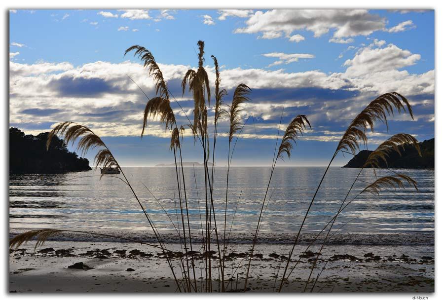 Stewart Island, Oban, Horseshoe Bay
