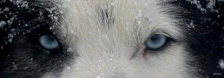 SE0012 Blue Eyes