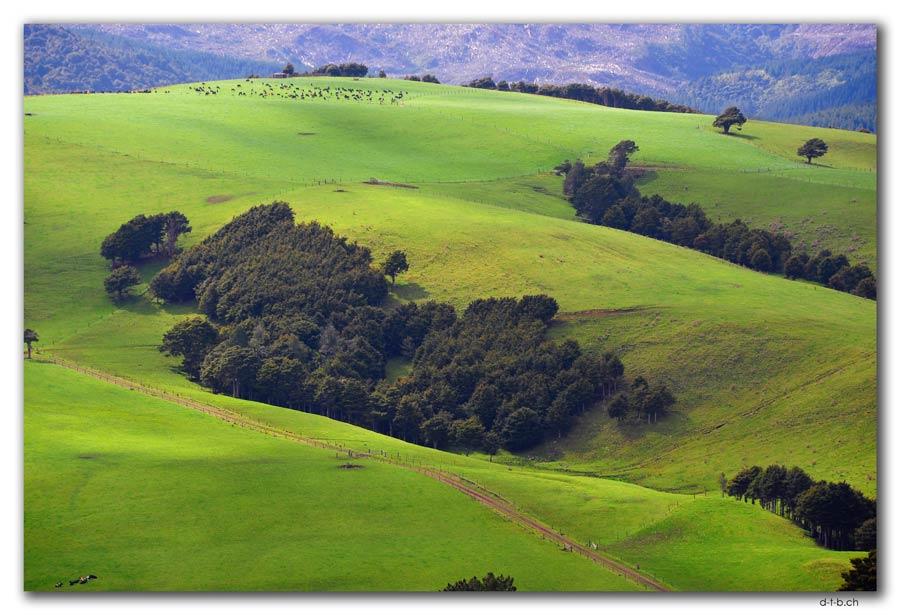 Landwirtschaft an der Kauriküste