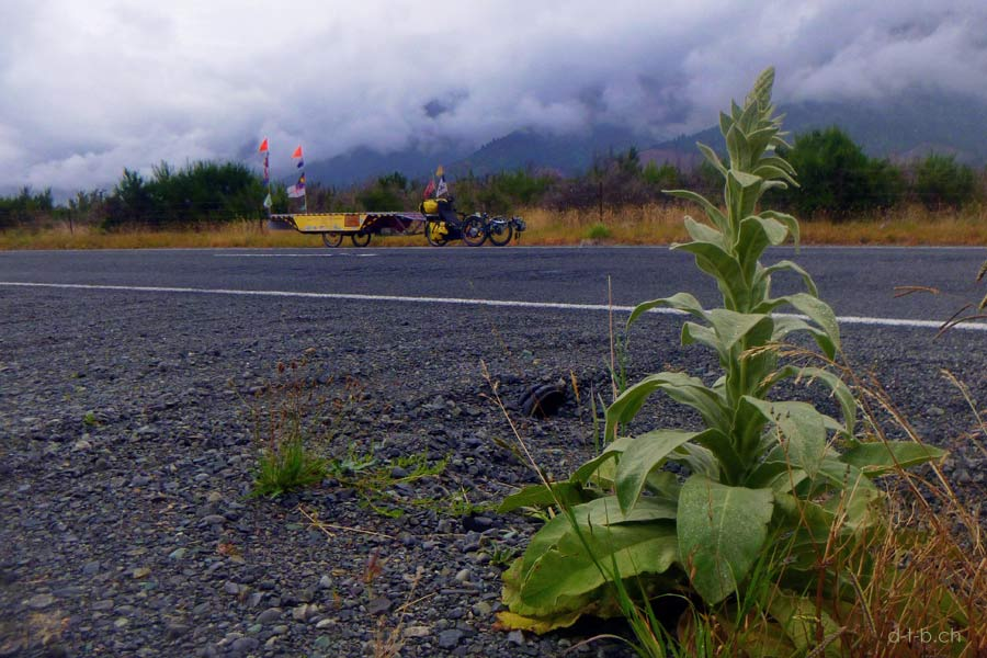 Solatrike im Wairau Valley