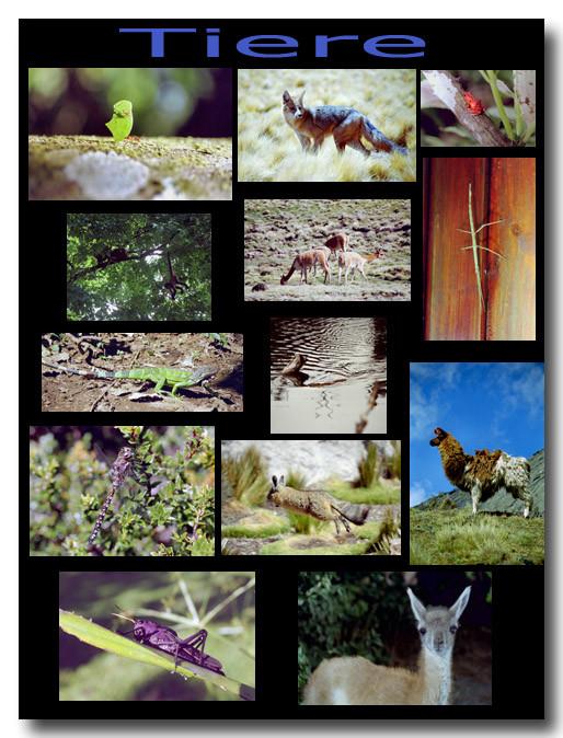 Tiere / Animals
