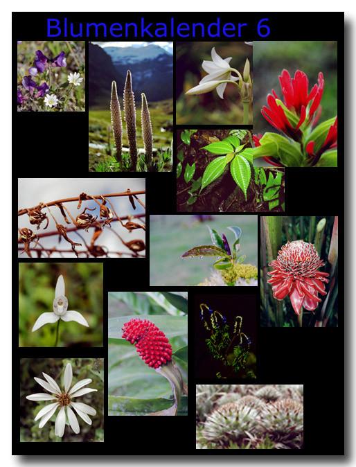 Blumen 6 / Flowers 6