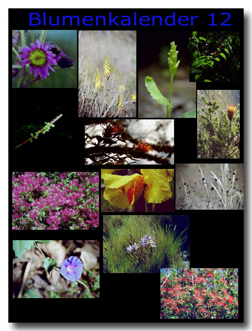 Blumen 12 / Flowers 12