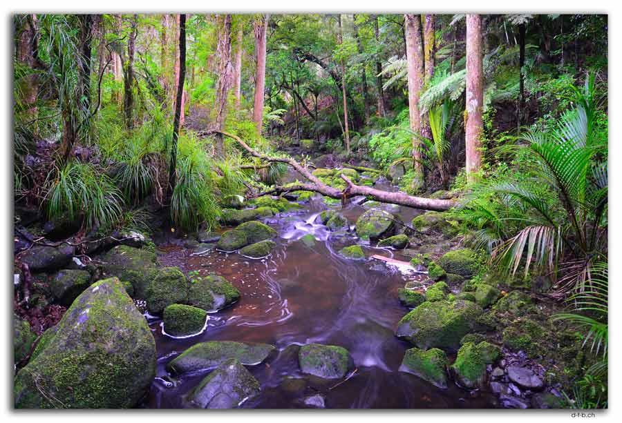 Whangarei. AH Reed Park. Waikoromiko Stream