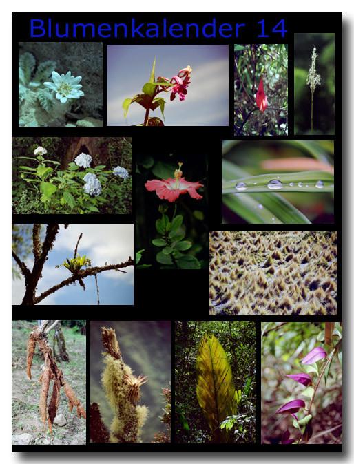 Blumen 14 / Flowers 14