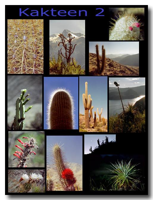 Kakteen 2 / Cacti 2