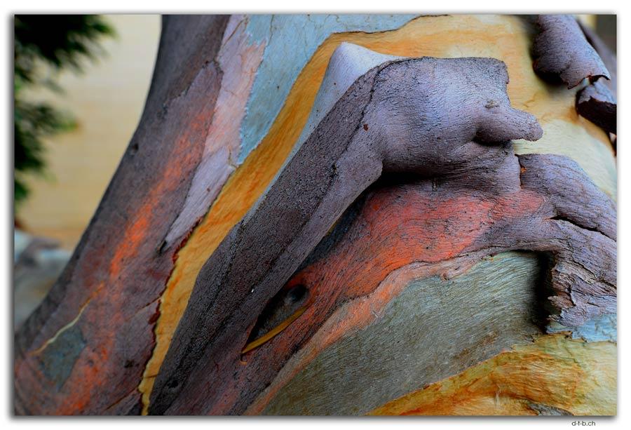 Bunter Eukalyptusbaum