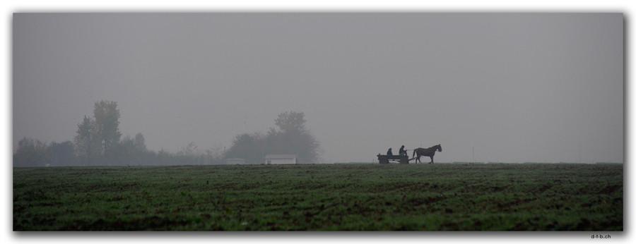 RO0238.Pferdegespann im Nebel