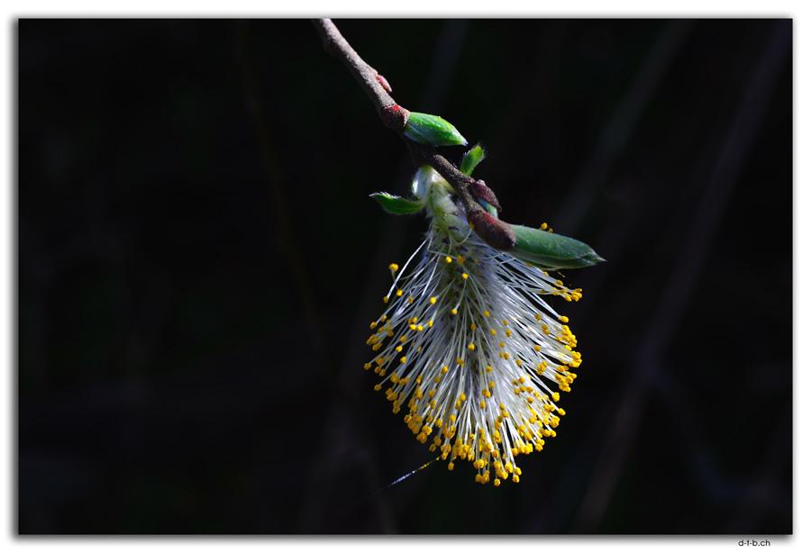 Blüte