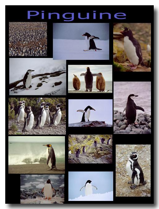 Pinguine / Penguins