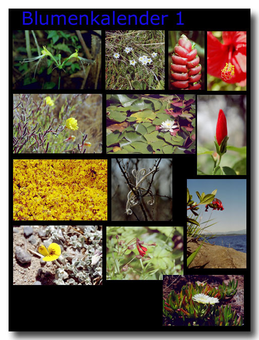 Blumen 1 / Flowers 1