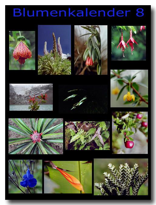 Blumen 8 / Flowers 8