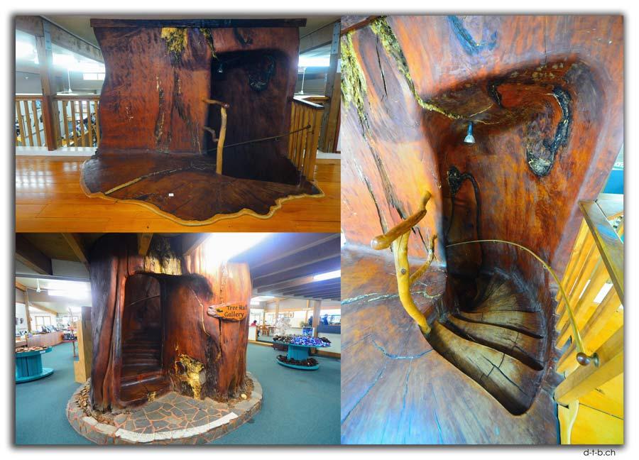 45'000 Jahre alter Kauri