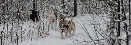 SE0014 Hundemeute
